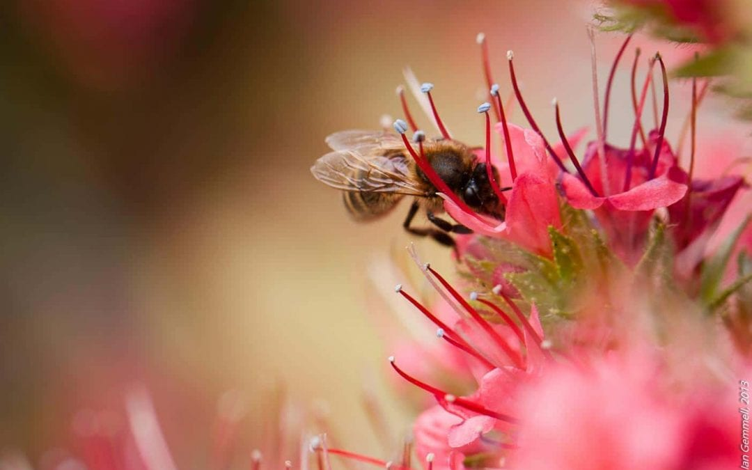 Bee There